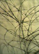 liba-pehely-100-x-3