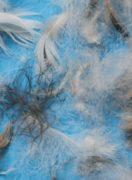 gray-duck-original-feather-12